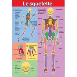 P* posters / le squelette